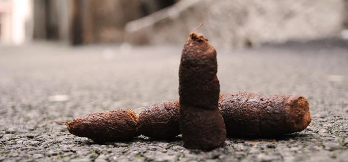 Rever d une crotte france astro - Crotte de chien dans le jardin ...