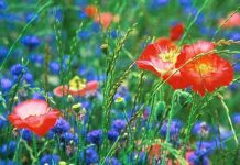 rêver de fleurs