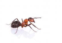 rêver de fourmis